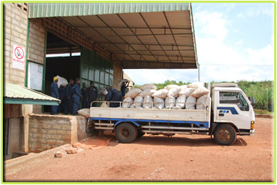 Maize being bagged for WFP